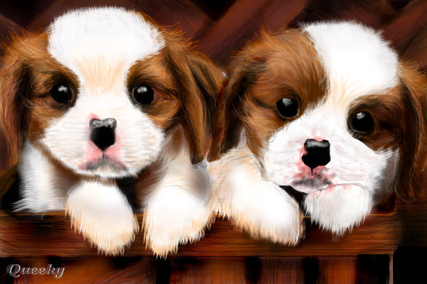Wallpaper & Pictures: Cute Dogs