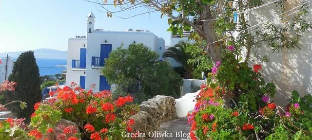 kwitnące pelargonie, białe domy niebieskie okiennice Mykonos Grecja