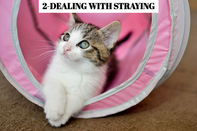 The main step to prevent your cat from straying is having it neutered. This will help curb its territorial roaming instincts. In addition, be sure to provide your cat with a safe and inviting a home environment that it will want to return to again and again. Make sure it has enough food and plenty of mental and physical stimulation. Finally, keep your cat indoors after dark. * QUIET TIME A chaotic household might lead a cat to seek peace and solitude elsewhere. Create a quiet area for your cat within the house. *FOOD-SEEKING MISSION Some straying behavior is related to the need for food. Make sure you give your cat enough to eat.