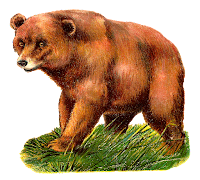 bear grizzly animal antique illustration image clipart drawing