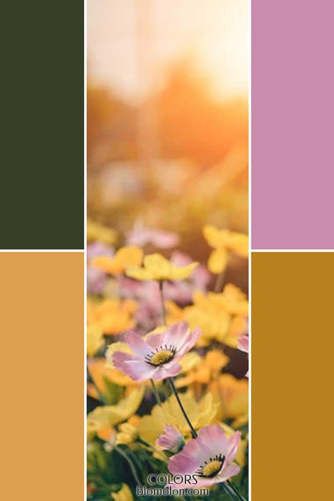 combinacion_novedades_de_color_6