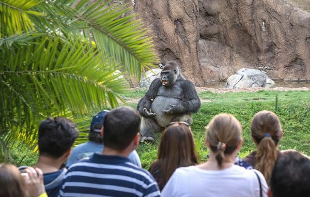 Atrações no Zoológico de Los Angeles