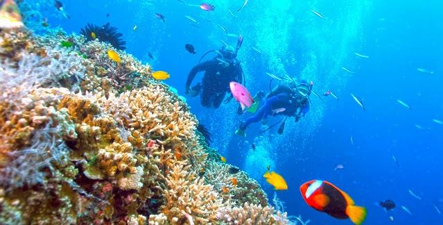 Manado Bunaken Island 1 Day Tour Bunaken Diving