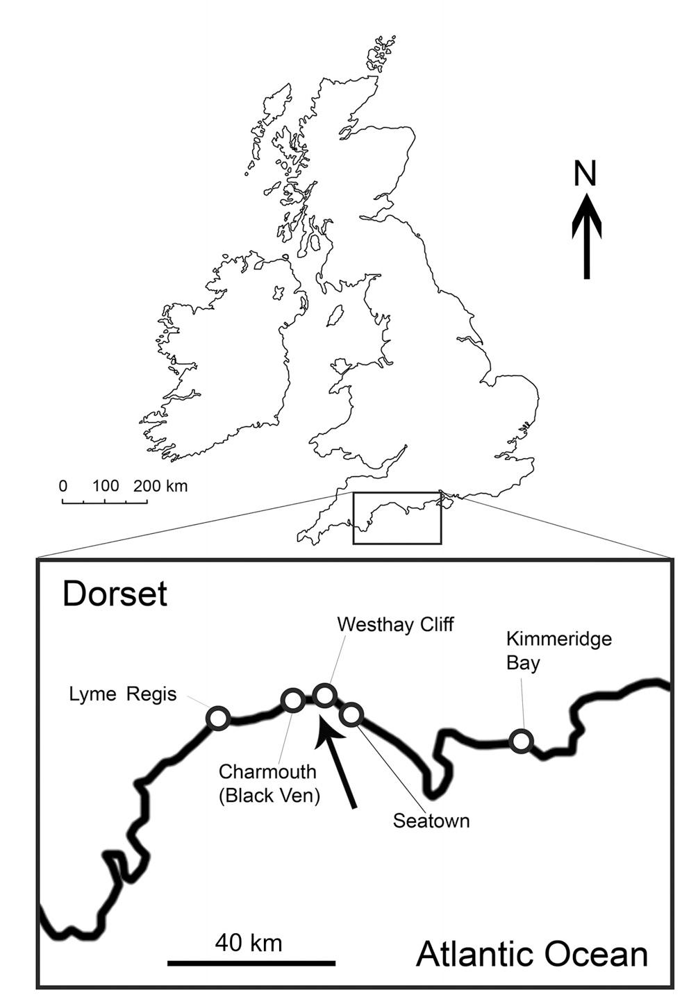 Paleontología y Evolución en la UCM: Diferenciación entre