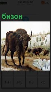 На поле пасется одна из разновидностей быков Бизон с крупными рогами