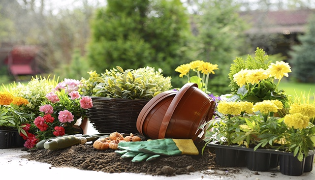 Image result for planting flowers