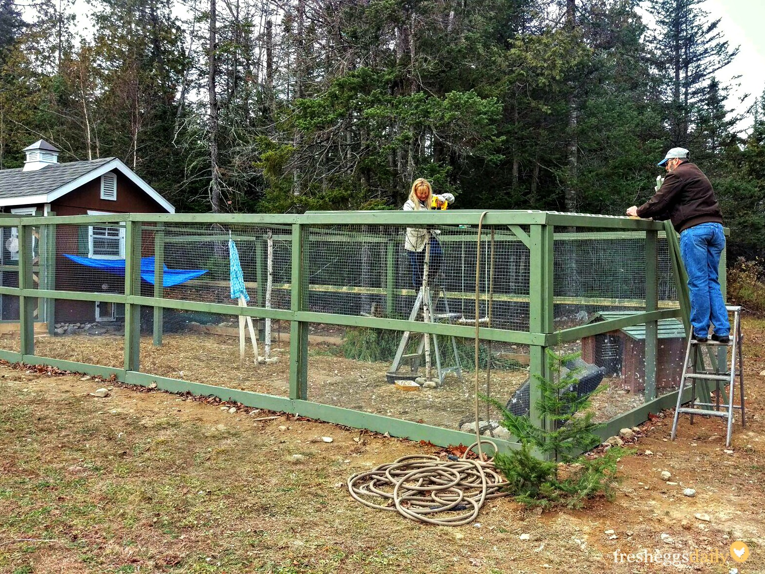 Building A Predator Proof Chicken Run Fresh Eggs Daily