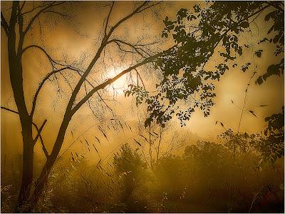 """Premi a la millor fotografia de paisatge: """"Paisatge camí de Sant Jeroni de la Murtra"""", de Joan Mimó"""