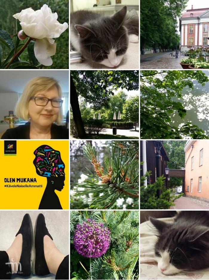 kesäkuun kuvia, kukkia, luontoa ja kissoja
