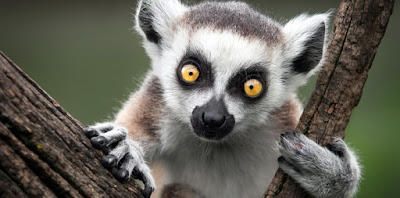 Animales raros de África
