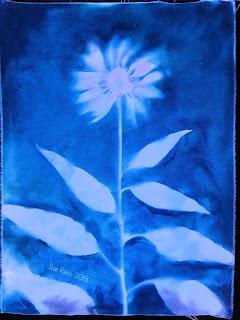 Wet cyanotype_Sue Reno_Image 427