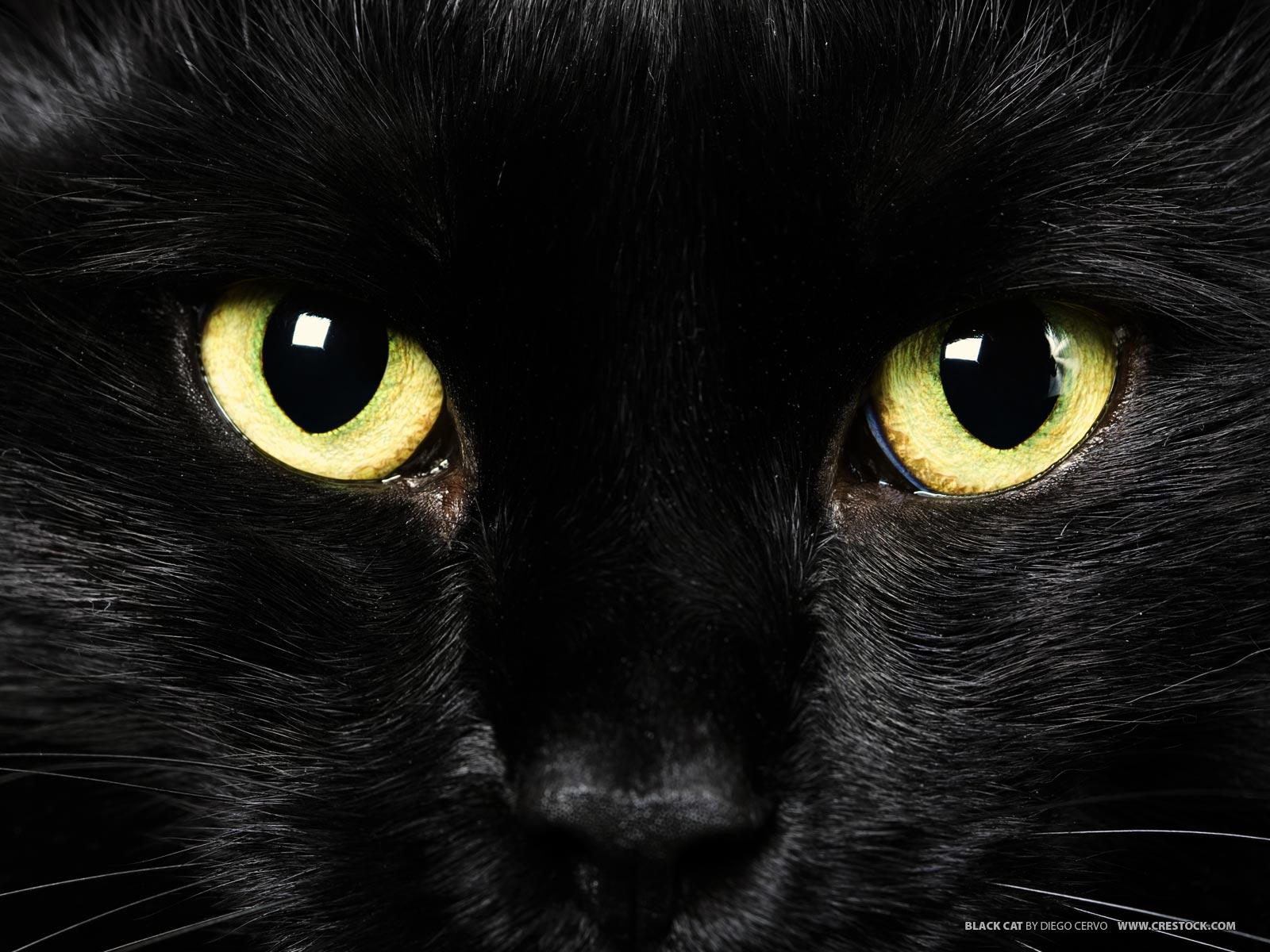 Black Apple Wallpaper Deanne Morrison Black Cat Wallpaper