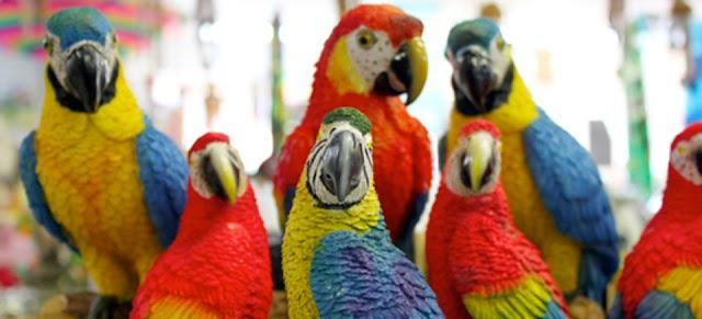 Παράνομο εμπόριο πτηνών στο πανηγύρι της εκκλησίας της Αγίας Παρασκευής Ηλιούπολης