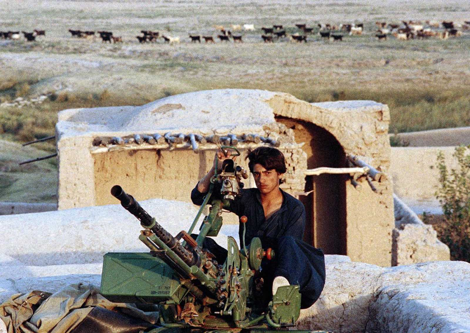 After the Soviet withdrawal. On a ruined fortress in the outskirts of the western Afghanistan city of Herat, a young man, formerly fighting for the Muslim guerrillas, but now on the payroll of the Afghan government, mans a weapon as cattle peacefully make their way to water in the background, on August 30, 1989.