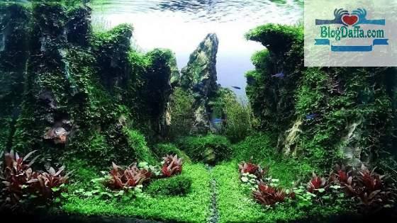 Tema aquascape Natural (Japanese Style)