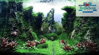 Apa itu Aquascape
