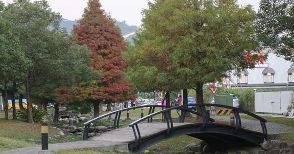 台中北屯|新都生態公園旁的和祥五街生態園道|小橋流水落羽松|楊柳|人行步道