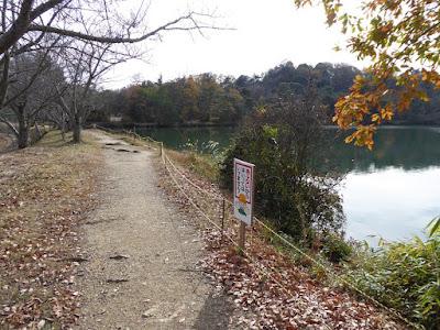 くろんど池 秋の紅葉ウォーキング 桜並木