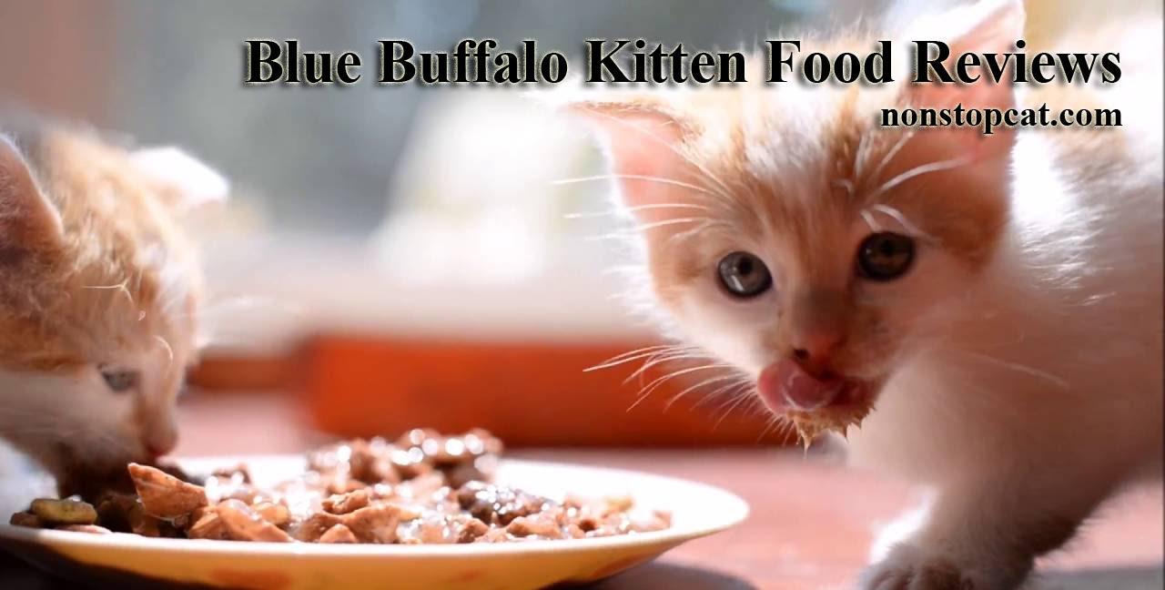 Blue Buffalo Kitten Food Reviews