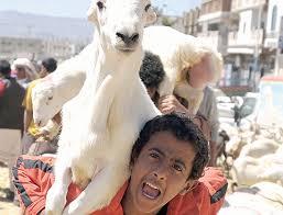 خروف العيد في اليمن
