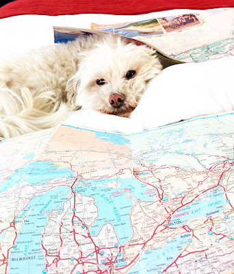 Road Tripping With Pets!