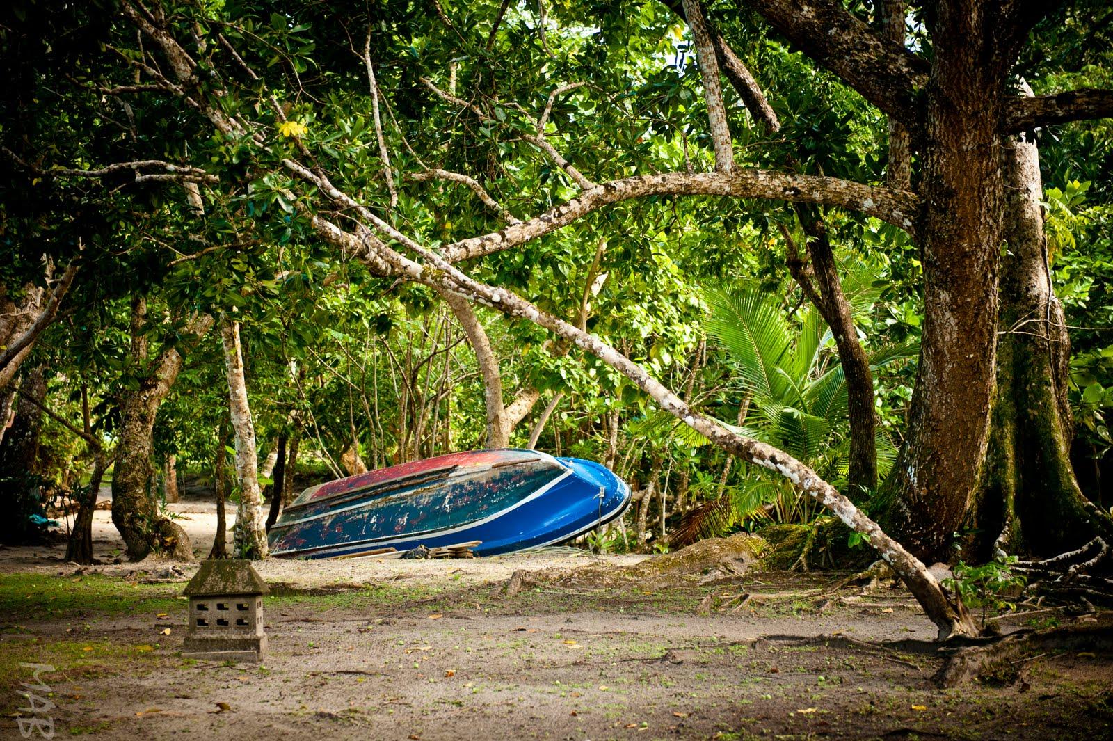 The World as Biddy Sees It: Fiji - Jungle & Plants