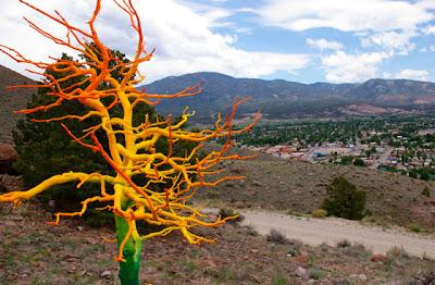 ارجاع الاشجار الميتة الى الحياة فى كولورادو