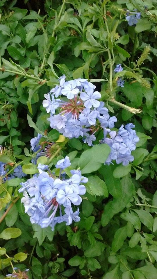 floresamatxo. todo sobre las flores: consejos para cuidar tus
