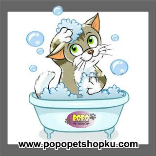 grooming kucing secara rutin
