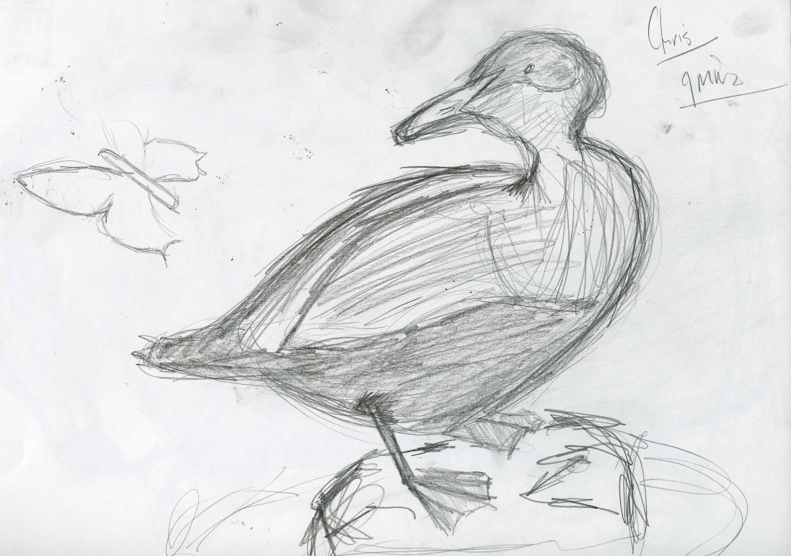 This duck is a very quick sketch as warm up the main focus of this was to get the main shape getting correct angles and proportion
