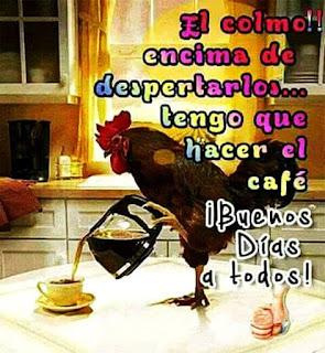 Gallo , colmo, despertarlos, hacer el café