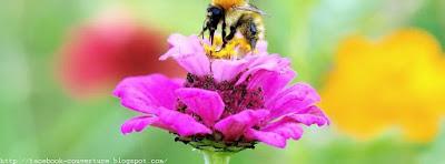 Belle image Couverture facebook C'est le printemps