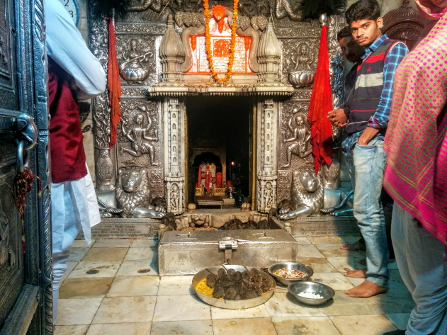 Karni Mata Temple - the place where rats are worshipped