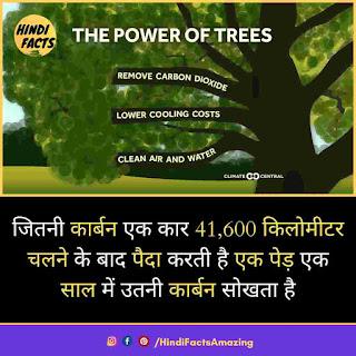 tree in hindi