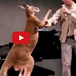 Australia = Real Boxing With Kangaroo