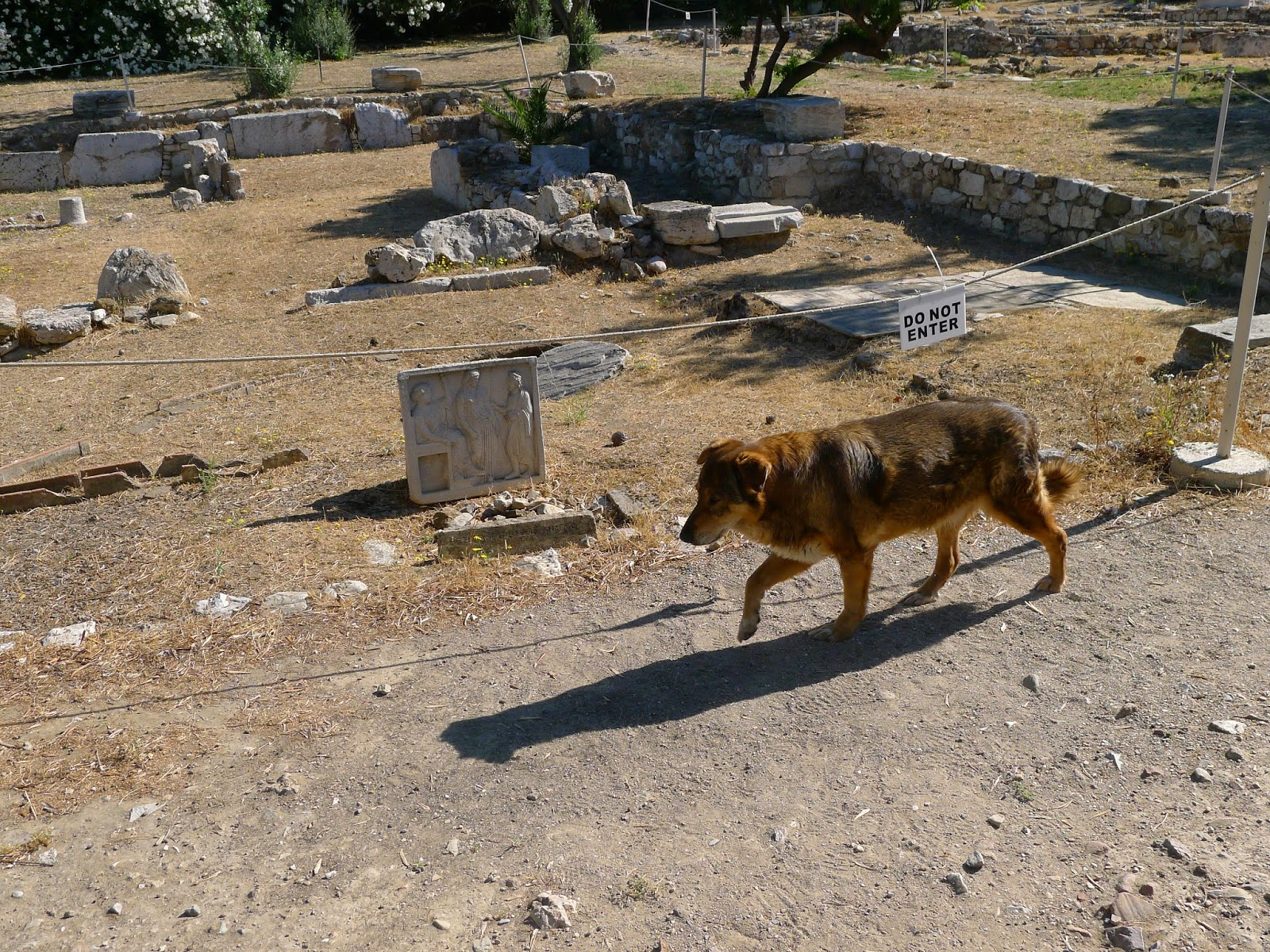 Greek Dogs