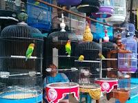 Harga Lovebird Di Pasar Depok Solo (April-Mei 2017)