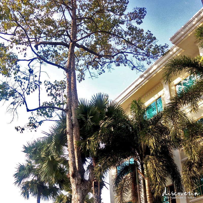 Palmiers à Siem Reap