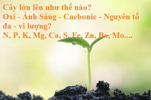 trồng cây bằng phương pháp thủy canh