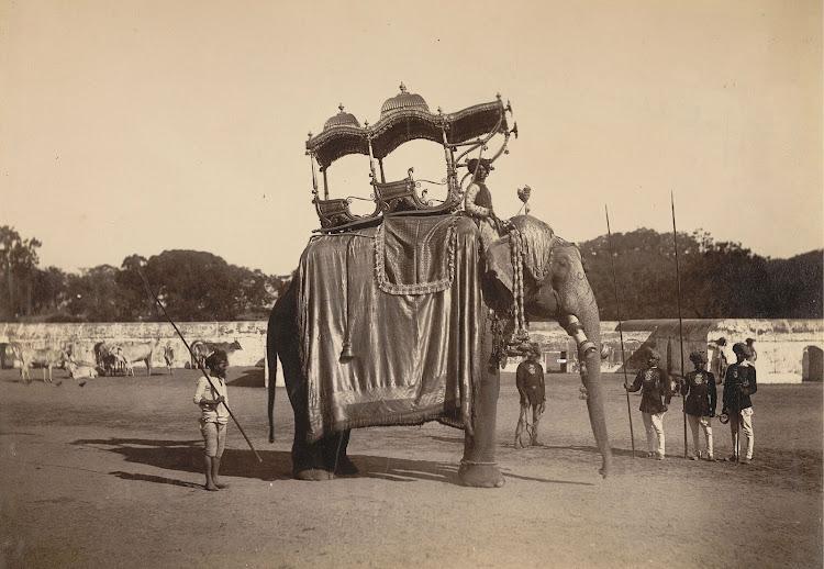 Elephant with golden howdah, Baroda - 1890