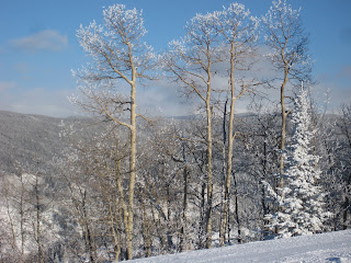 Ice covered Aspens on Ruthie's Run.