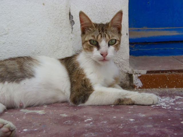 Nisyros, Greece. Stray cat http://psychologyfoodandfitness.blogspot.co.uk/