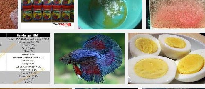 Makanan Ikan Cupang Terbaik bagi Pertumbuhan dan Bernutrisi