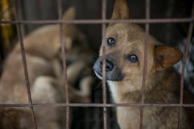 Cães em jaulas