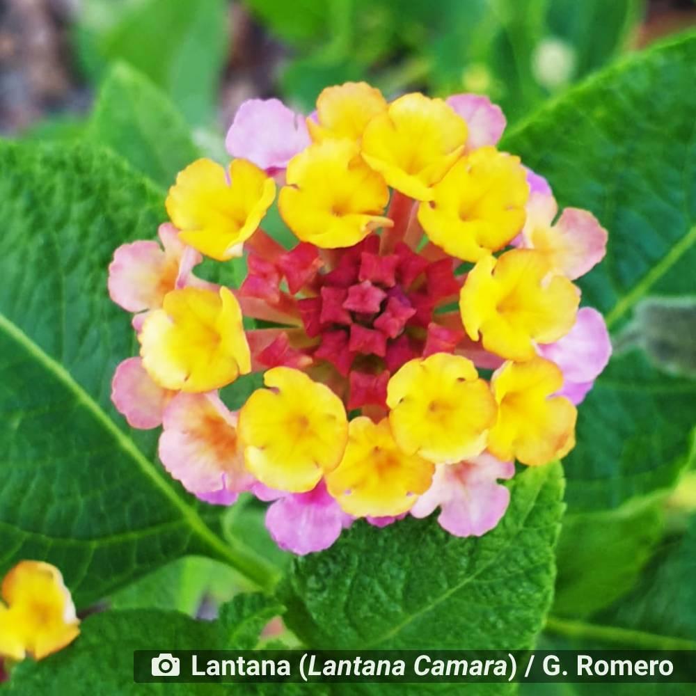 ambiente de leitura carlos romero thamara duarte flores amor as flores jardim florear cultivo poesia licao flores