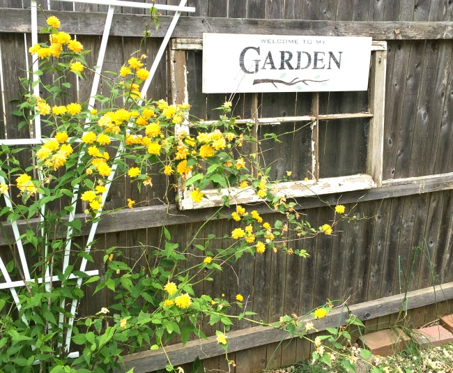 Old fence with yellow flowers and garden sign