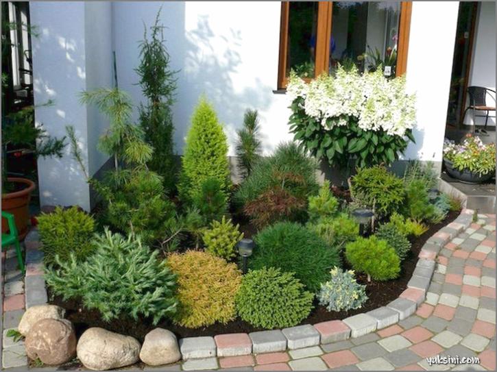 kombinasi berbagai macam tanaman untuk taman kecil di depan rumah