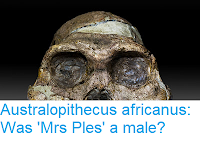 https://sciencythoughts.blogspot.com/2018/04/australopithecus-africanus-was-mrs-ples.html