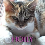 icone holly