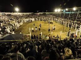 Resultado de imagem para prova de potro de 21 dias parque sindicato rural de herval